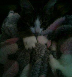 Отдам котёнка в добрые руки 3 месяца девочка