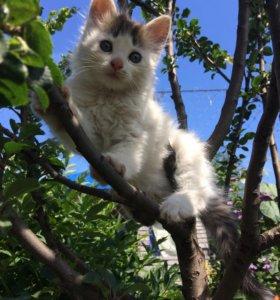 Котёнок в добрые руки!