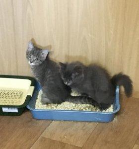Кошечки 2,5 месяца