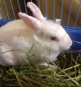 Декоративный кролик девочка ,с клеткой.