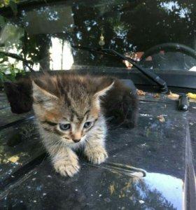 Котята даром
