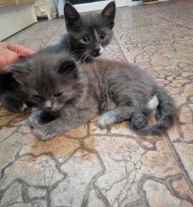 Два кота даром