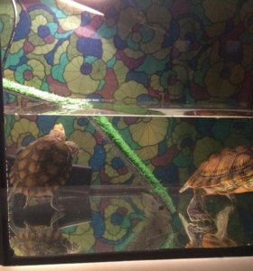 Красноухие черепахи+аквариум