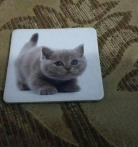 Карточка с фотографиями животных