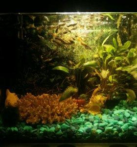 Продам аквариум 30л.