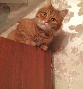 Ласковый добрый кот в хорошие руки