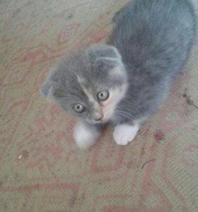 Кошечка веслоухая в добрые руки