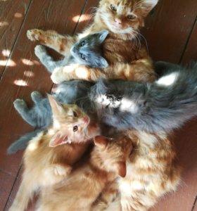 Котята, котенок, кот, кошка