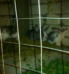 Продам кроликов молодняк