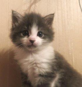 Котята в дар!