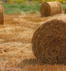 Пшеница, Сено, Солома