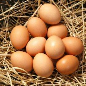 Продаются куриные яйца