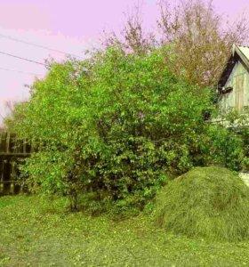Участок, 7 сот., сельхоз (снт или днп)