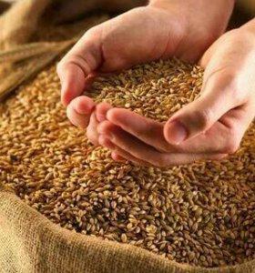Зерно фураж 15 тонн