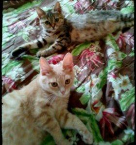 Красивые, смышленые котята