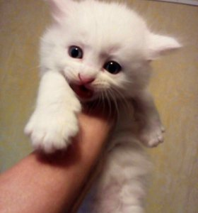 Милые котятки