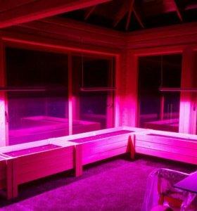 Светодиодные фитосветильники для теплиц, оранжерей