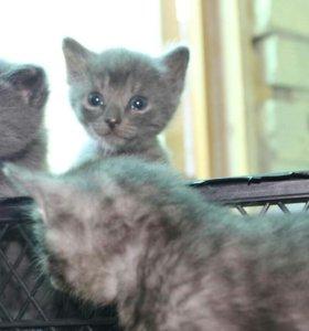 Отдаем котят в очень добрые руки