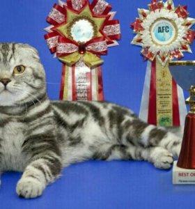 Вязка с большим международным чемпионом