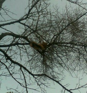 Спил деревьев.