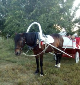 Лошади,конные прогулки,пони
