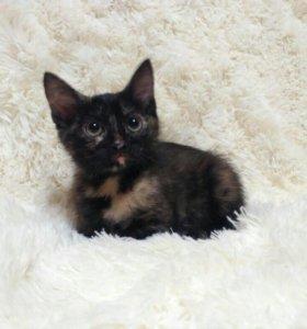 Пёстрые котята-милашки