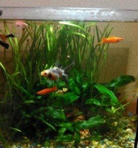 Рыбки+аквариум и все прилагаемое оборудование