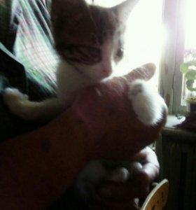 Отдам в добрые руки, 1 кошечка и 3 котика