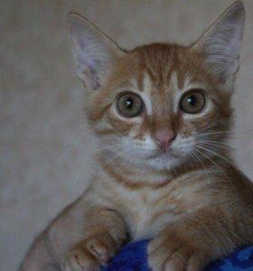 Рыжий котёнок Бонифаций