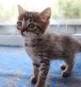 Котенок крошка
