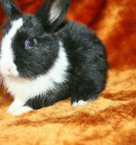 Кролик карликовый с клеткой
