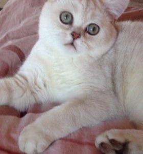 Котенок bs11