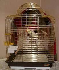 Попугаи корелла