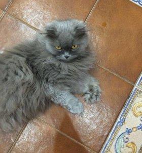 Кошка веслоухая