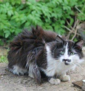 кошка молодая
