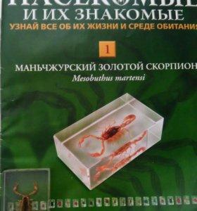 Маньчжурский золотой скорпион