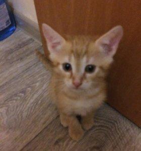Котёночек 3 месяца