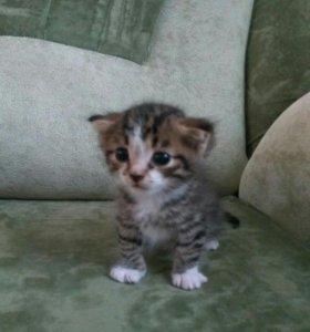 Отдадим котёнка в хорошие руки.