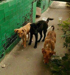Собаки дворовые в добрые руки
