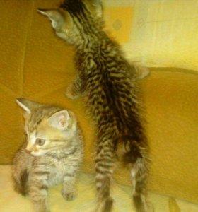 Котик и кошечка