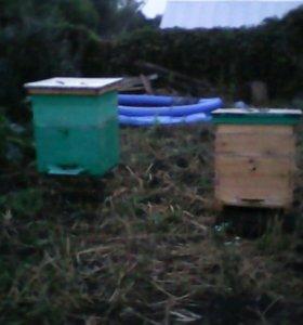 Продам улья с пчелами