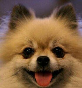 🌹🐕Выгул собак