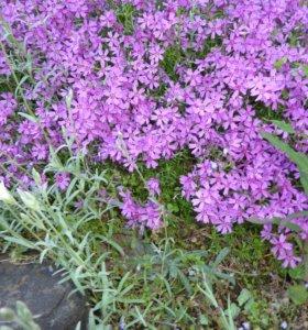 Растения и цветы для сада