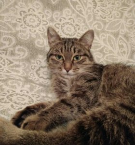 Кошка Буся