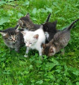 Котята в добрые руки!!