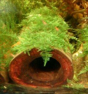 Для анциструса в аквариум