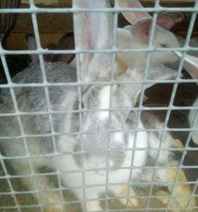 Кролики мясо