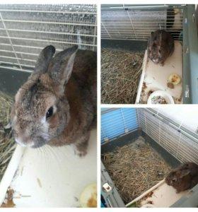 Кролик с клеткой декоративный