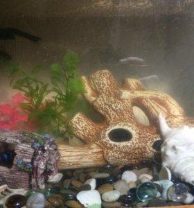 Аквариум 10 литров с рыбами