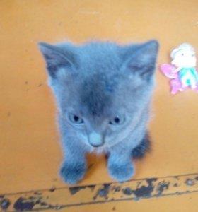 Котята кошки мышеловки